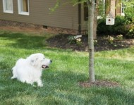 PetSafe-Outdoor-Ultrasonic-Bark-Deterrent-0-7