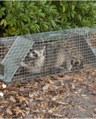 Havahart-1050-Live-Animal-Two-Door-Large-Raccoon-and-Opossum-Cage-Trap-0-2