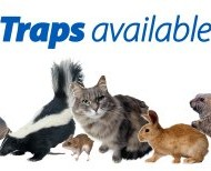 Havahart-1062-Easy-Set-Two-Door-Cage-Trap-for-Rabbits-Skunks-and-Squirrels-0-4