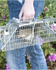 Havahart-1062-Easy-Set-Two-Door-Cage-Trap-for-Rabbits-Skunks-and-Squirrels-0-7