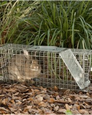 Havahart-1088-Collapsible-One-Door-Cage-Trap-for-Rabbit-Skunk-Mink-and-Large-Squirrels-0-3